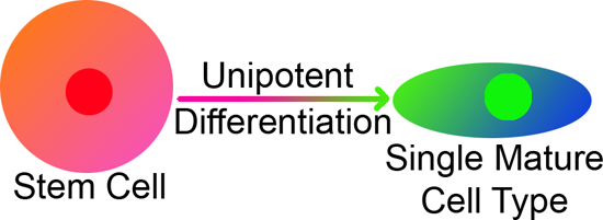 Unipotent